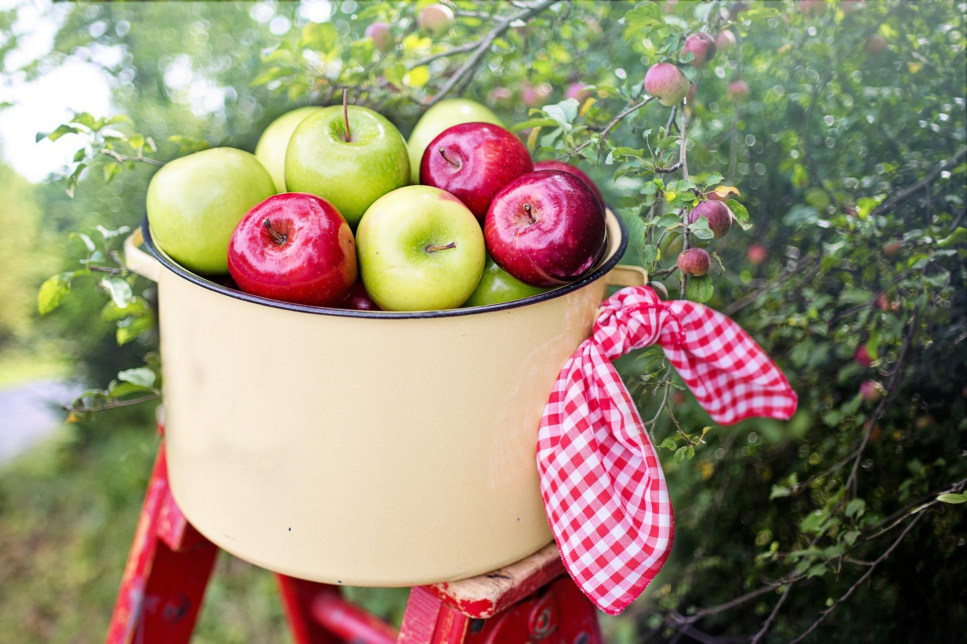 fruit picking okanagan